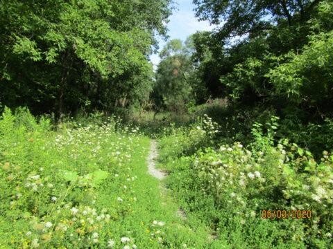 Path to Keelesdale